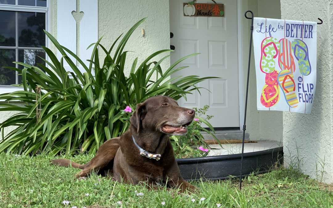 Fido's Happiness Guides Home Decisions for Over Half of Dog Owners